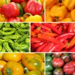 Paprika collage — Stock Photo