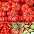 Tomato collage — Stock Photo