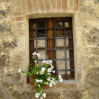 White petunia in window - Foto de Stock