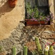 Window with cacti — Stok fotoğraf