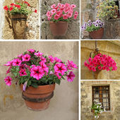 Collage with flowerpot with flowering petunia — Stock Photo