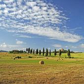 Beauty of tuscan landscape — Stock Photo