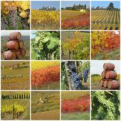Vine collage — Stock Photo