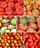 Assorted tomato collage — Stock Photo