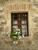 White petunia in window — Foto Stock