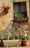 Window with cacti — Stock Photo