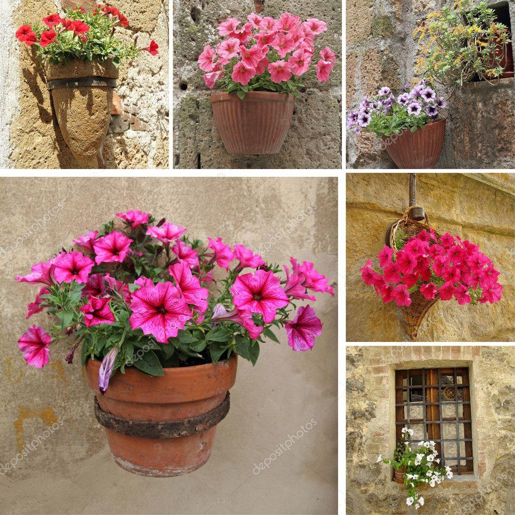 Цветы на улице название