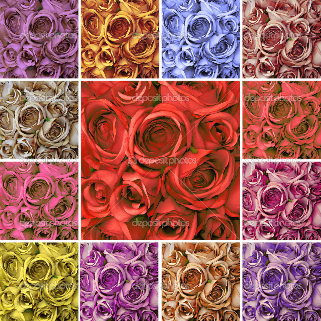 Collage card with many colorful  roses  Stock Photo #8307136