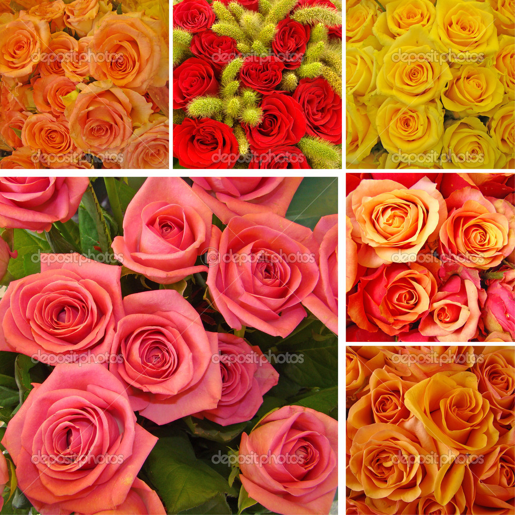 Collage with roses  — Stock Photo #8307261