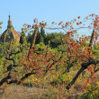 Old curve viticulture  and in background chapel — Stock Photo