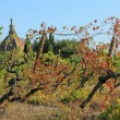 Old curve viticulture and in background chapel — Stock Photo #8310488