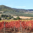 Stock Photo: Vineyards and hill in Tuscany