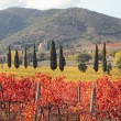 Landscape of tuscan vineyards in autumn, — Stock Photo