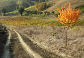 Path in tuscan countryside — Stock Photo