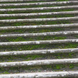 Mossy stairs — Photo