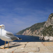 Saegull with view of mediterranean coast — Stock Photo