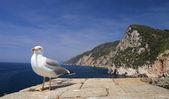 Saegull with view of mediterranean coast — Stock Photo