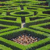 Art of gardening — Stock Photo