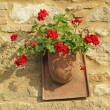 Red geranium in rustic pot on stone wall — Stock Photo