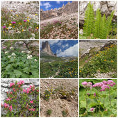 Collage with alpine flowers — Stock Photo
