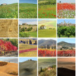 Collage with fantastic landscape of Tuscany — Stock Photo