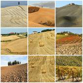 Collage con paisaje pintoresco país toscano — Foto de Stock