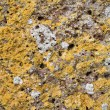 Stock Photo: Lichen on rock