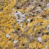 лишайника на скале — Стоковое фото
