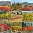 Collage with fantastic fall colors of vineyards in Italy — Stock Photo #8744442