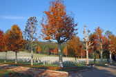 Plane trees in fall colors on Florence American Cemetery — Stock Photo