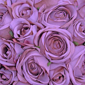 Violet rose pattern — Stock Photo
