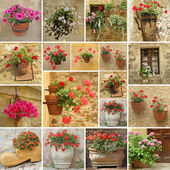 Set of flower pots — Stock Photo