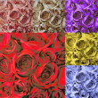 Collage card with many colorful roses — Stock Photo