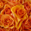 Orange roses — Stock Photo #8917600
