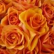 Orange roses — Stock Photo #8917600