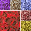 Collage card with many colorful roses — Stock Photo #8917907