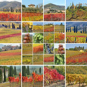 Fall vineyards collage — Stock Photo