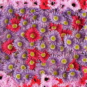 Gerberas pattern — Stock Photo