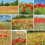 collage con paisaje rural en primavera en Italia — Stockfoto