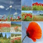 collage met papavers op velden en hemel, Italië — Stockfoto