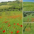 Collage with famous tuscan landscape — Foto Stock