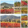 Collage with fantastic landscape of tuscan vineyards in autumn — Stock Photo