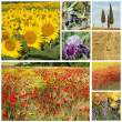 Collage with tuscan flora, Italy, Europe — Stock Photo #9986725