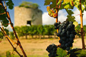 Grapes and medieval tower — Stock Photo