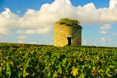 Ld ruined stone medieval tower in vineyard in region Medoc, France — Stock Photo