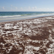 Oil Spill pollutes Floridbeach — Stock Photo #8606394