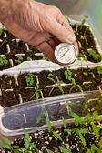 Starting Garden from Seeds Indoors — Stock Photo