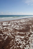 Oil Spill pollutes Florida beach — Stock Photo