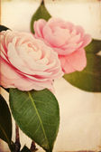 Feminine Camellia Flowers with Vintage Texture — Stock Photo