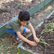Royalty-Free Stock Photo: Young Boy Planting in the Vegetable Garden